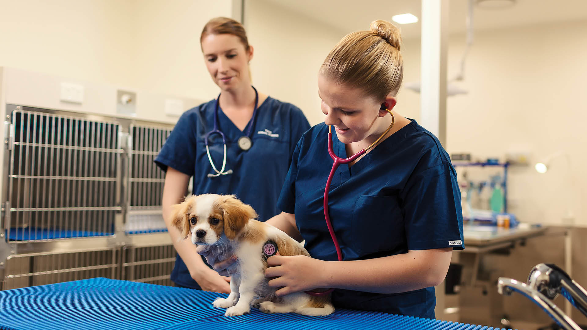 tafe queensland veterinary clinic