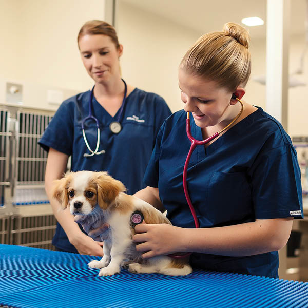 study veterinary nursing at tafe queensland