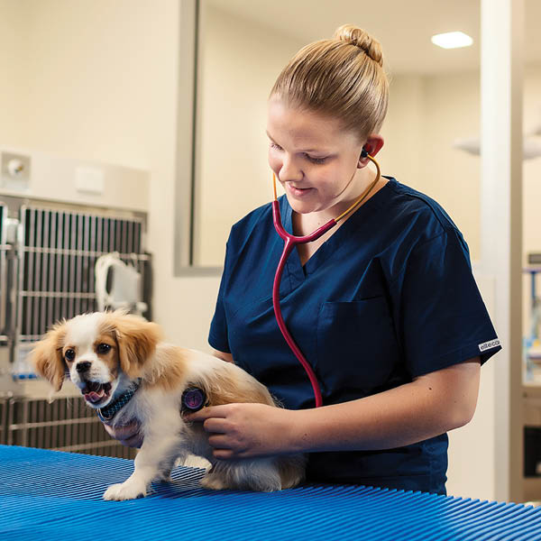 animal-care-lp-hero-b-veterinary-clinic-b-teacher-and-student-dog-tile.jpg