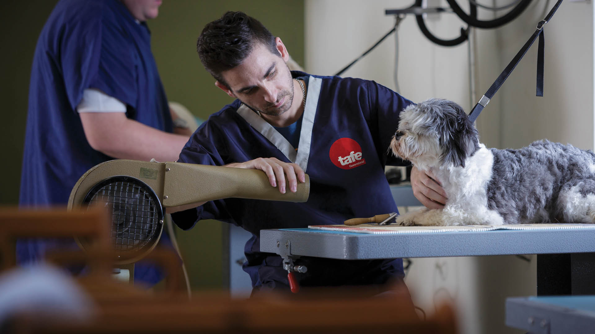 study veterinary services at tafe queensland