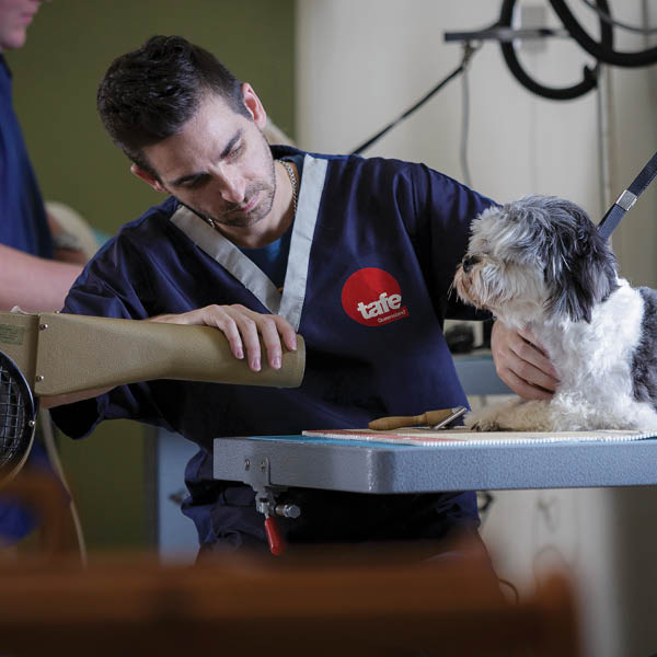 study animal services at tafe queensland