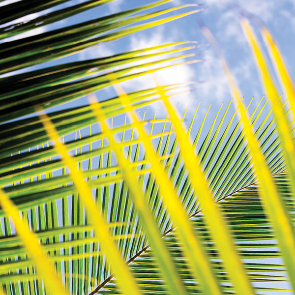 generic-campus-hero-a-palm-fronds-tile.jpg